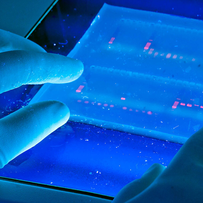 DNA Lab. (source: University of Michigan School of Natural Resources & Environment on Wikimedia Commons)